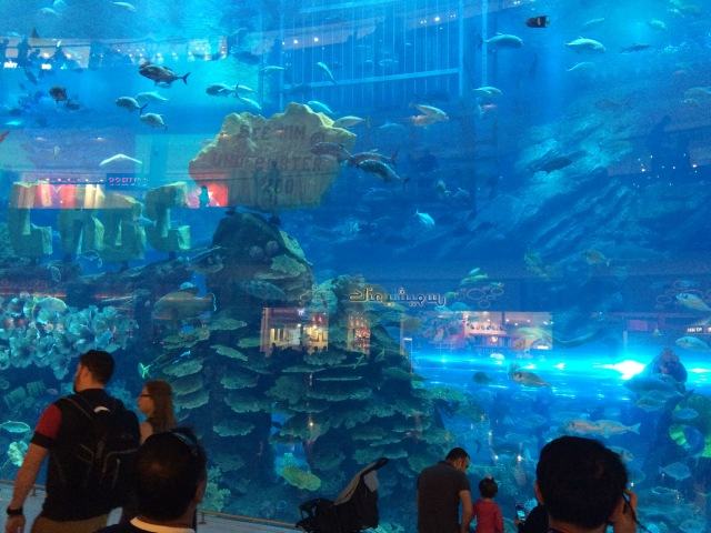 Swimming at the Dubai Mall